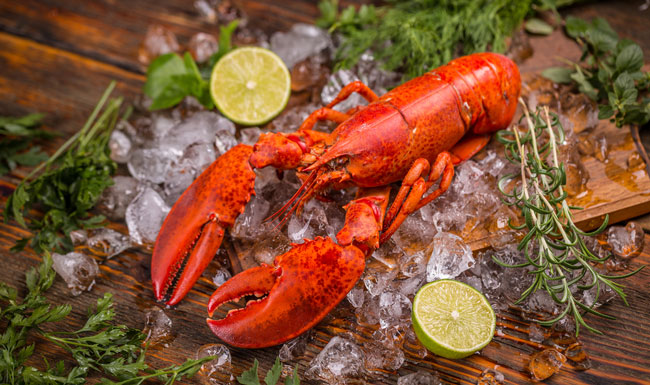 Lobster on ice with herbs and lime