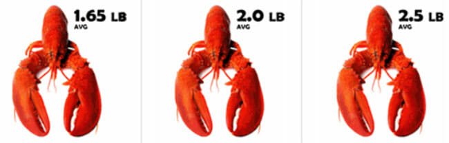 Simply Lobsters Hardshell