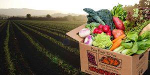 Farm Fresh To You box with fresh vegetables